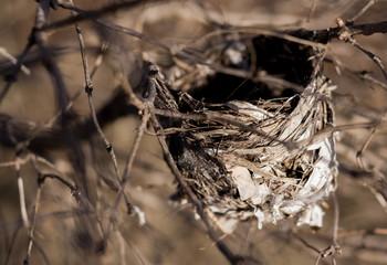 Empty Hummingbird's Nest