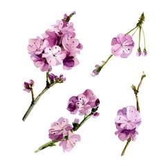 Watercolor set Sakura flowers.