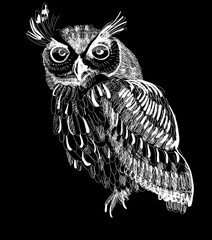 owl hand-drawing on a black background