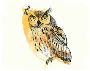 owl hand-drawing on a watercolor background
