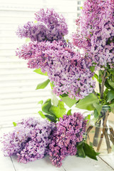 Branches of flowering purple lilac syringa
