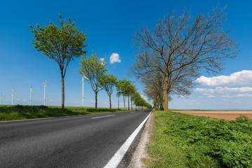 Deutsche Landstraße, Allee, in Rheinland-Pfalz und Windräder im Hintergrund unter sommerlich blauem Himmel