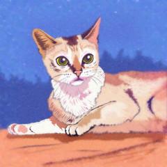 Burmilla Cat Illustration