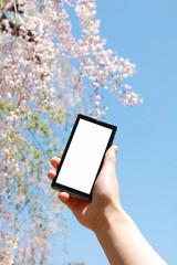 スマートフォントと桜
