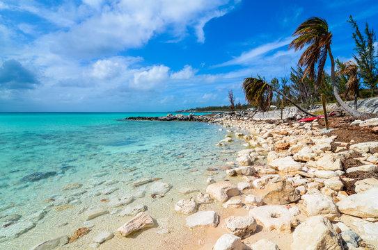 Stone beach with palms on the island Eleuthera on the Bahamas