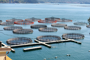 fish aquaculture in La Spezia, Italy