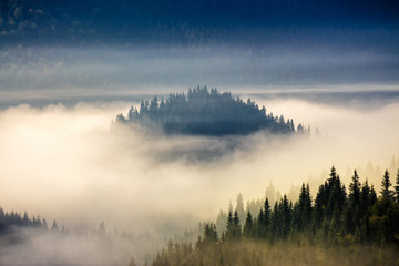coniferous forest on a hillside in foggy mountains at sunrise