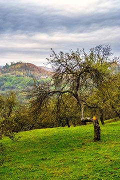 apple tree garden on hillside meadow in mountain
