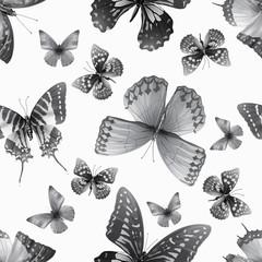 butterfly 06 grey