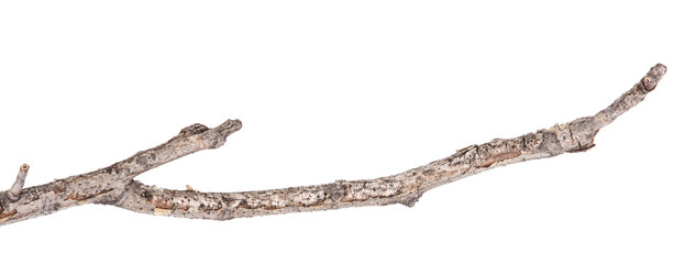 Dry tree branches isolated not a white background
