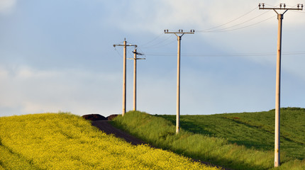 High voltage electricity poles between wheat and canola fields