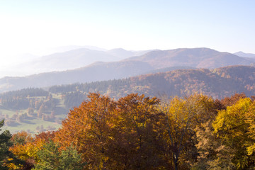 Fall forest seen from the mountain