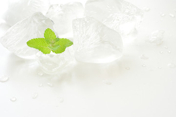 ミントの葉と氷 白色背景