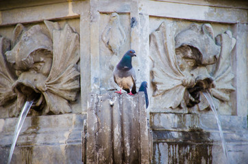 fountain with pigeons