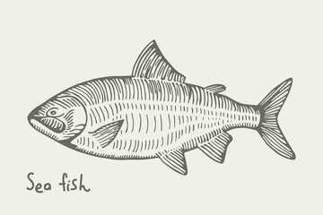 Salmon fish of the sea. isolated on white background. vector illustration