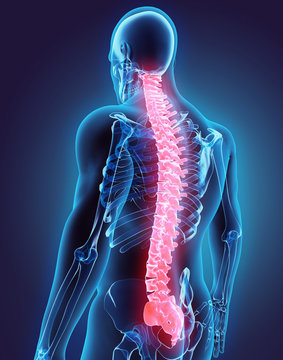 3D illustration of Spine, medical concept.