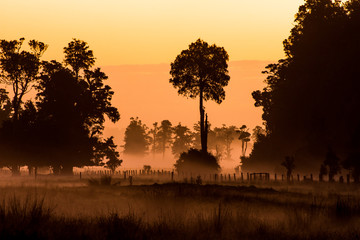 Fogy sunset forest scenery in New Zealand