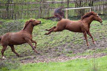 Horse kick out