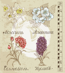 Flower set with narcissus, jasminum, hyacinth and carnation