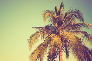 Coconut tree on blue sky background vintage color