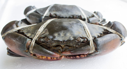 raw black crab
