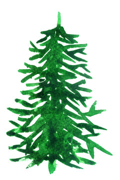 green watercolor spruce on white background