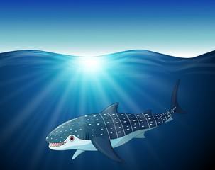 Cartoon whale-shark on the sea