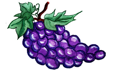Figure grapes brush in watercolor
