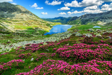 Wall Mural - Spectacular rhododendron flowers and Bucura mountain lakes,Retezat mountains,Romania