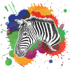 Zebra with Colorful Splashes Vector Illustration