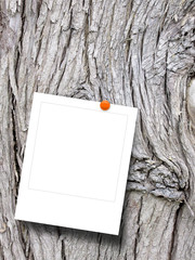 Close-up of one blank instant photo frame with pin on grey tree bark background