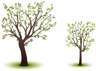 Green Deciduous Trees - Colored Illustration, Vector