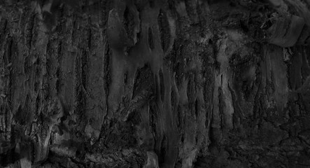 Poster Firewood texture Burnt Wood Texture. Dark Abstract Wooden Background. A Tree Stum