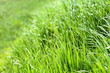 green fresh grass background