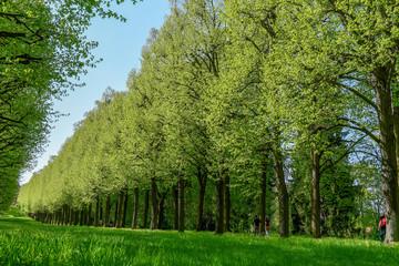 Parklandschaft im Frühling - Land Brandenburg