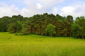 Park in Kislovodsk