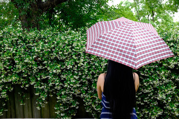 Picture of asian girl with umbrella