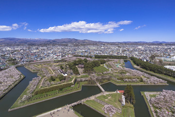 Fototapete - 五稜郭タワーより五稜郭公園の桜