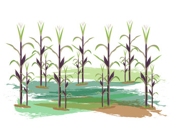 corn plant vector design