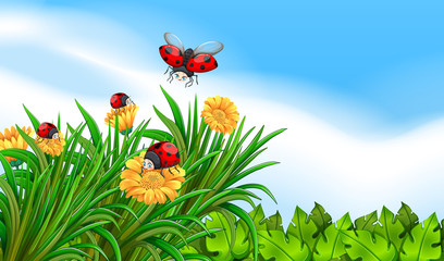 Scene with ladybugs flying in the garden