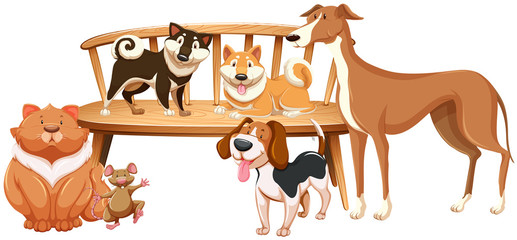 Dogs and cat on the wooden chair