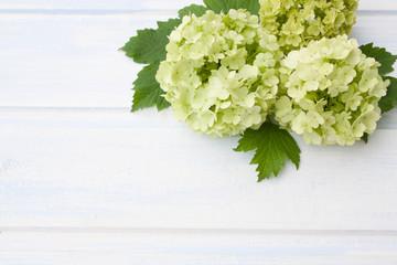 Zelfklevend Fotobehang Hydrangea hydrangea