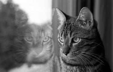Cerca immagini vibrisse for Finestra gatto