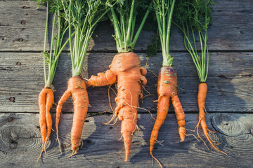 Trendy ugly organic  carrot