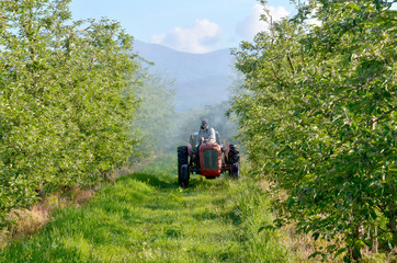 spraying apple orchard in may