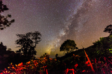 The Milky Way and big trees in the mountains of Chiangdao