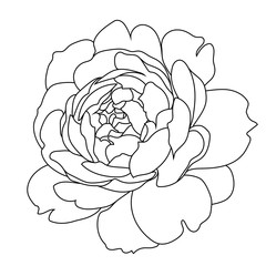 Graphical rose bud illustration. Vector.