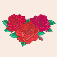 Vector drawing of roses