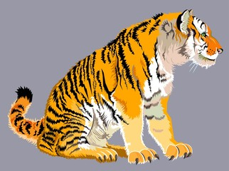 Illustration of sitting striped tiger, vector cartoon image.