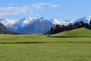 Beauty spring in alps